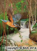 Kingfisher Painting,bird painting,art of bas,BAS,wildlife art