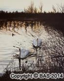 swan painting,bird painting,watercolour painting,art of bas,BAS
