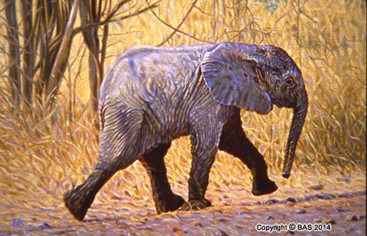 wildlife art,wildlife art paintings,oil painting,bas,art of bas,Elephant Painting,canvas,lithograph,print,Zambia Africa,Aristotle