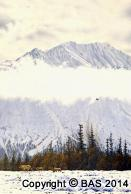 wildlife art,wildlife art paintings,oil painting,canvas prints,bas,art of bas,Grizzly Bears,Denali National Park Alaska,Muir - Psalm,oil painting on masonite