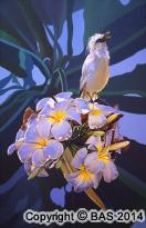 wildlife art,wildlife art paintings,Jalak Bali Starling,oil painting,Oil Paintings,Bali Indonesia,canvas prints,shelley,ward beecher