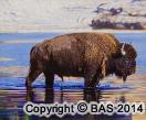 wildlife art,wildlife art paintings,Oil Painting Bison from Yellowstone National Park United States,wildlife art originals
